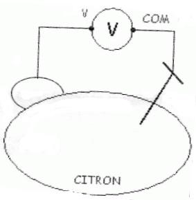 pilecitron2.jpg